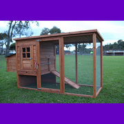 chicken house and chickens
